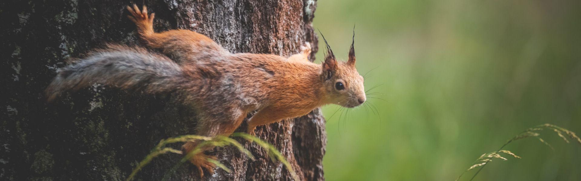 suvine loodus, orav puutüvel