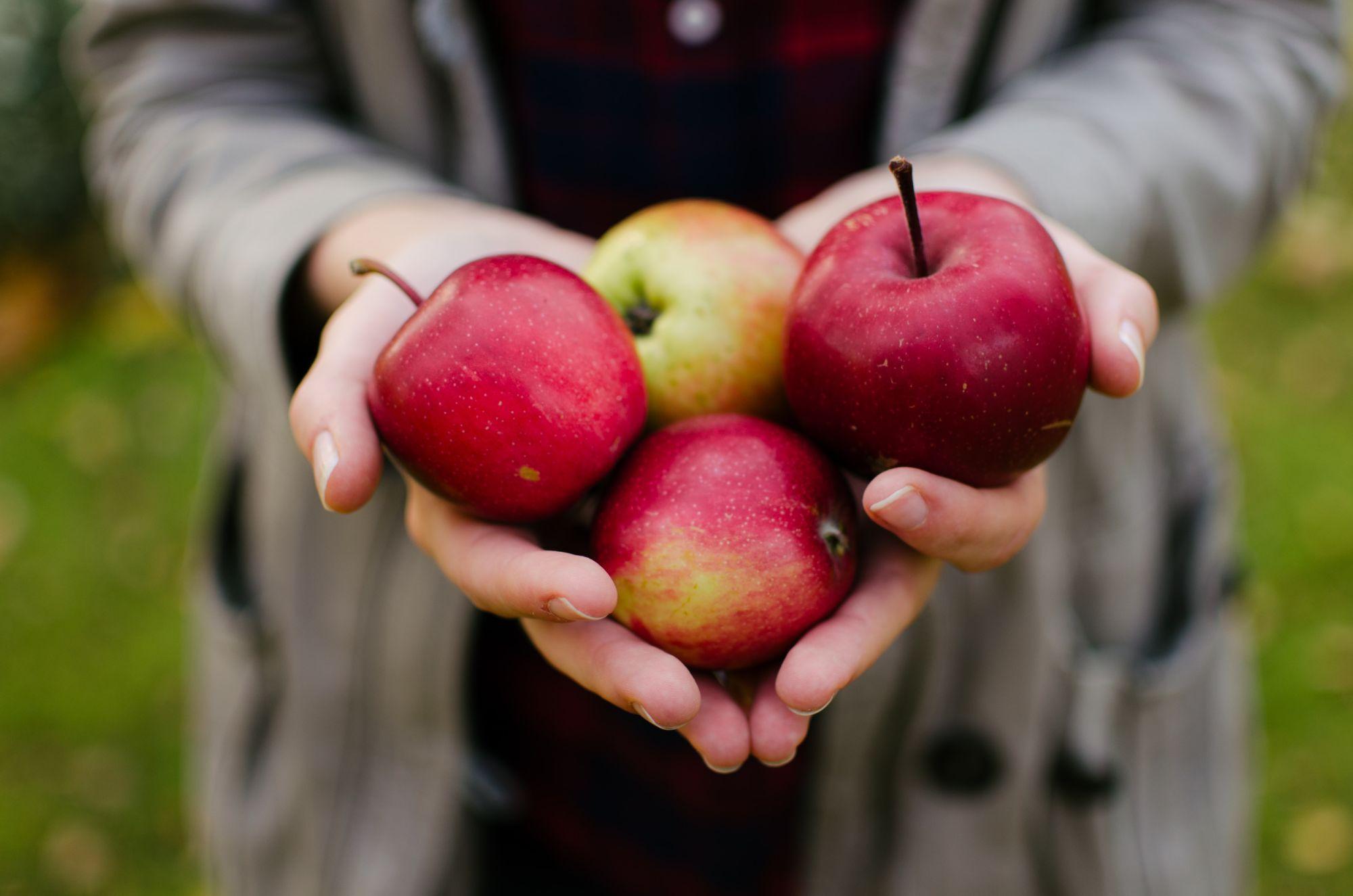 punased õunad inimese peos