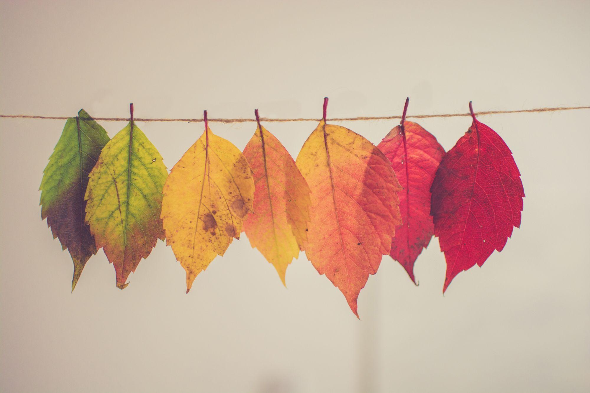värvilised puulehed pesunööril