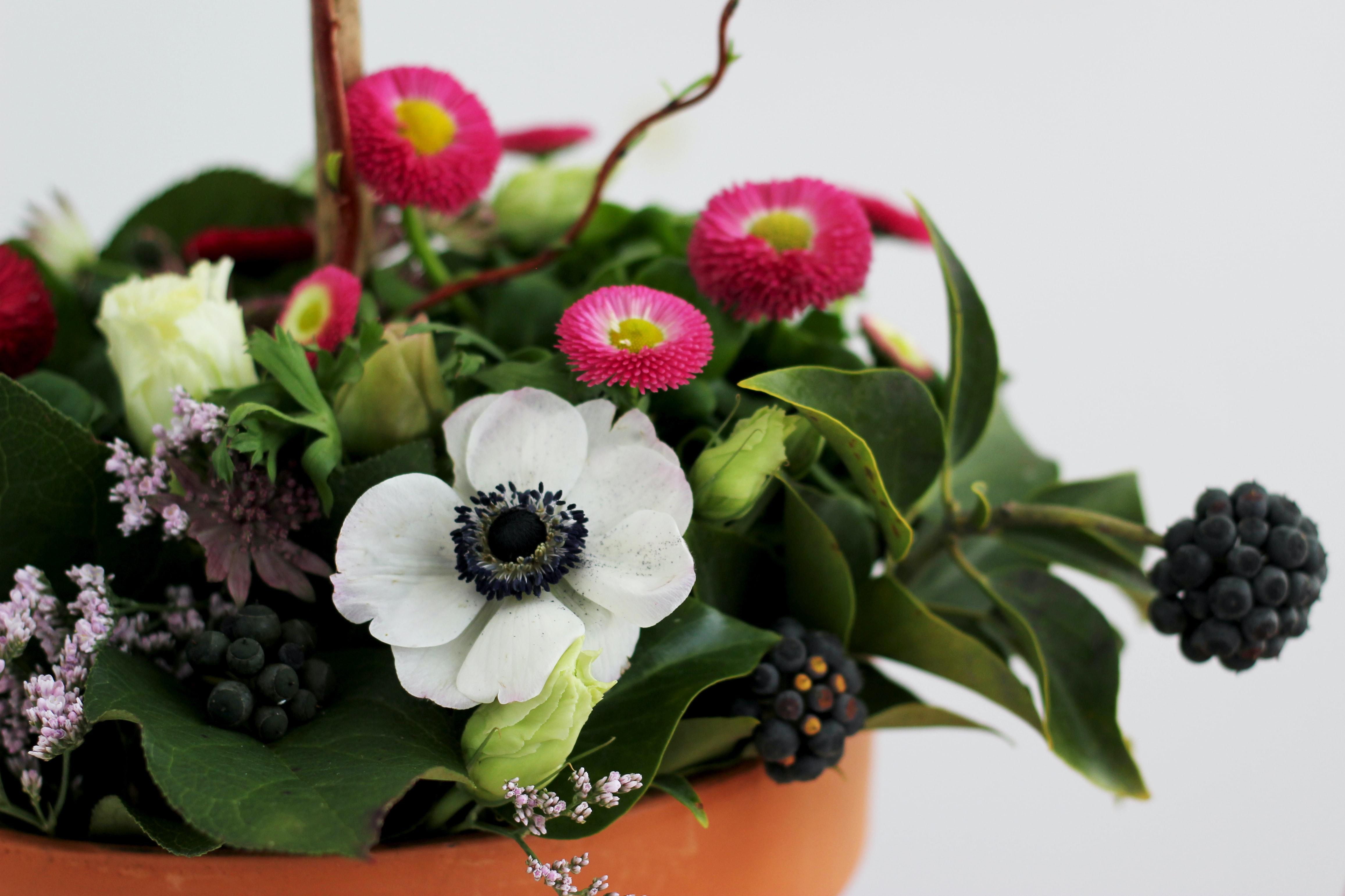 lilled potis